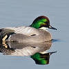COLUSA NWR : Colusa County California