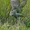 Great Gray Owl<br /> Phantom Lake area