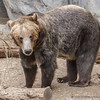 SAN DIEGO ZOO'S BEARS : 