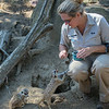 MEERKAT<br /> KEEPER NICOLE FEEDING BITS OF TOMATO.
