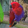 SAN DIEGO ZOO'S PARROTS, MACAWS, LORIES, PARAKEETS, COCKATOOS, ETC : 